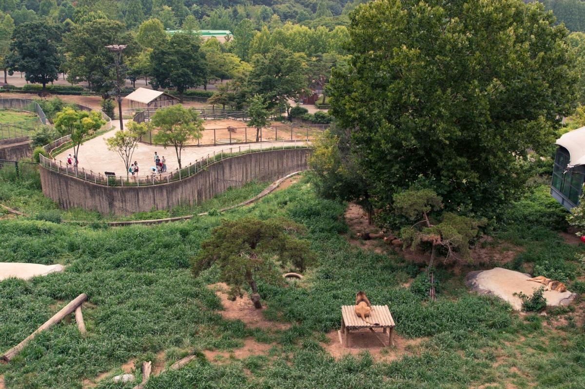 Lion Pit
