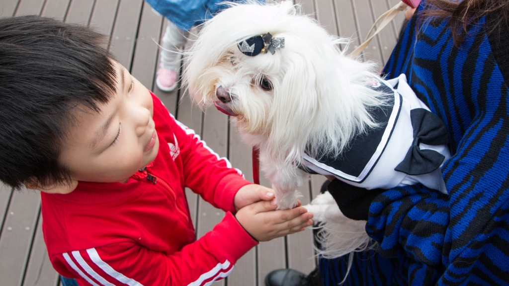 dog maltese puppy korea
